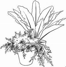 kleine pflanze im topf ausmalbild malvorlage blumen