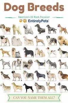 Dog Name Chart Popular Dog Breeds Tumblr