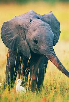 iphone x wallpaper elephant baby elephant wallpaper for iphone amazing wallpapers