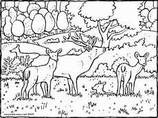 Ausmalbilder Erwachsene Wald Hirsche Im Wald Kiddimalseite