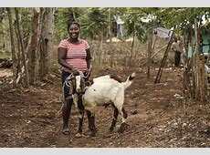 How to Start A Profitable Goat Farming Business In Nigeria