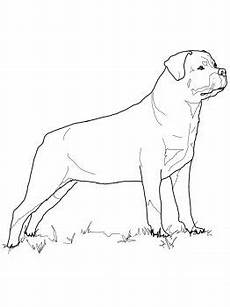 rottweiler with images coloring page pencil
