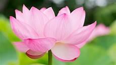 best flower desktop wallpaper flower desktop backgrounds 60 images