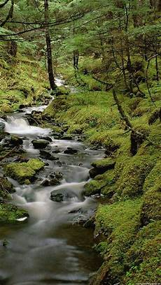 Iphone Wallpaper Cool Nature by Beautiful Iphone 6 Plus Wallpapers Wallpapersafari