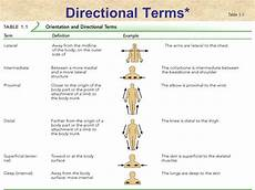 Anatomic Chart Physiology Base Of Human Movement Lecture 1 Uts Sport