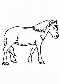 ausmalbilder braunes pony pferde malvorlagen
