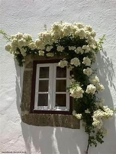fioriere per davanzale finestra white walls window and climbing cr 232 me de la cr 232 me