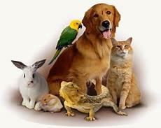 animali da cortile elenco nomi per animali domestici cani gatti rettili roditori