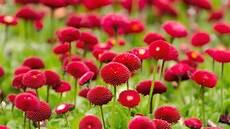 flower images hd wallpapers beautiful flowers 4 u hd 720p 1080p