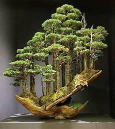 plantas penduradas ao ar livre a imagem pode conter planta e atividades ao ar livre