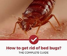 How Do You Get Bed Bugs Get Rid Of Bugs And Rodents Home And Garden Help Pest