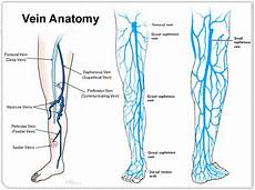 Varicose Vein Size Chart Artery Vs Vein What Are The Differences