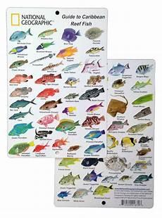 Reef Fish Identification Chart Caribbean Coral Reef Fish Guide Fish Chart Sea Fish