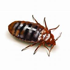 bed bug in the new york tri state area assured