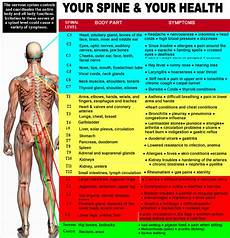 Chart Of Nerves In Back Nerve Chart Kehoe Chiropractic