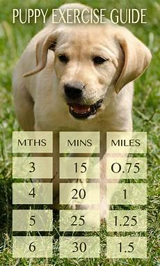 Puppy Exercise Chart Labrador Puppy Exercise How Much Is Too Much