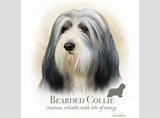 1000  images about THE BEAUTIFUL SERENE BEARDED COLLIE on