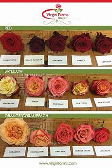 Rose Variety Comparison Chart Red Bi Yellow Amp Orange