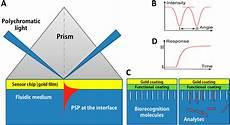 Surface Plasmon Resonance Sensors Free Full Text Surface Plasmon Resonance A