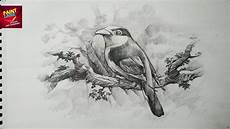 Pencil Art Drawings How To Draw A Bird With Pencil Drawing Shading Youtube