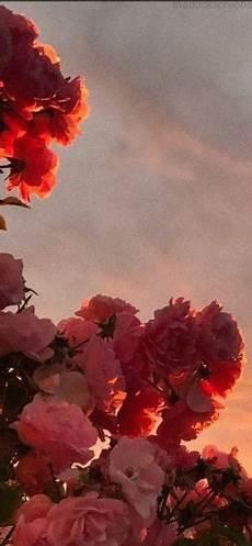 Flower Wallpaper Loading by Flowers Iphone Wallpaper