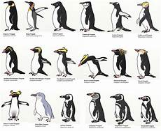 Types Of Penguins Chart If I Introduced A Population Of Penguins Into The