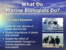 What Do Wildlife Biologists Do Marine Biologist Without Video Power Point