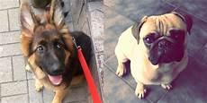 lille hund efterlysning stor og lille hund er l 248 bet hjemmefra