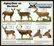 Deer Antler Age Chart A Dixie Lady Deer Hunter Aging Deer Chart