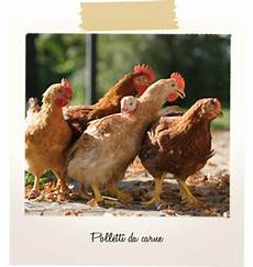 allevamenti animali da cortile animali da cortile agraria barsanti