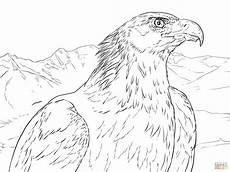 coloriage portrait d un aigle royal coloriages 224