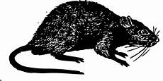 rats mice termite and pest
