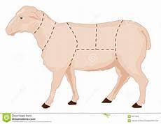 Sheep Chart Stock Illustration Illustration Of Parts