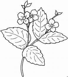 Malvorlagen Blumen Gratis Blume Klein Bluete Gross Blatt Ausmalbild Malvorlage