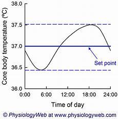 Circadian Rhythm Chart Physiology Graph Circadian Rhythm Of Core Body