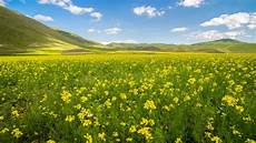 Nature Summer 4k Wallpaper by 4k Wallpaper With Rapeseed Field In Summer Hd Wallpapers