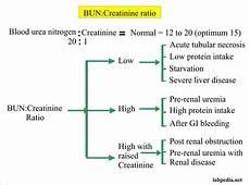 Blood Urea Level Chart Blood Urea Nitrogen Bun Or Urea Nitrogen Bun Creatinine