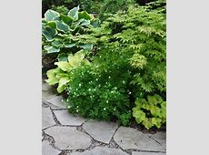 Hometalk   Another Example of a Beautiful Shade Garden