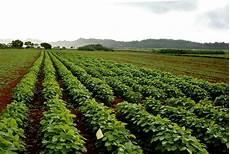 Crop Pricing Economic Strength Of Hawaii Seed Crop Industry Confirmed