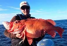stor fisk nordlys med dette monsteret satte 216 yvind ny rekord