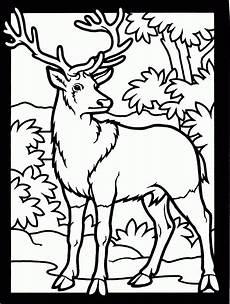 Ausmalbilder Tiere Hirsch Hirsch Im Wald Ausmalbild Malvorlage Tiere Mit Wald