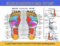 Norman Reflexology Foot Chart Rac Foot Chart 1024x791 Jpg 1024 215 791 пригодится
