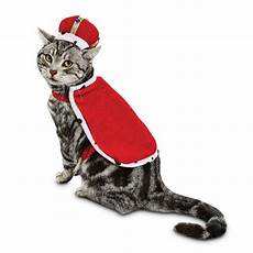 best costumes for cats popsugar pets