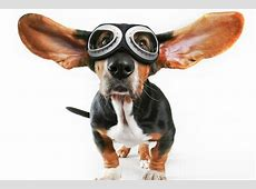 How to Deal with Plane Anxiety in Dogs   DogVills