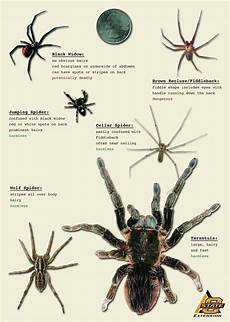 Oklahoma Spiders Identification Chart Spiders Aren T That Scary News And Information