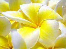 flower wallpaper hd size size hd wallpapers for pc wallpaper cave