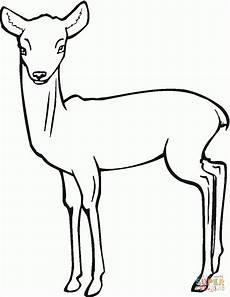 Ausmalbilder Tiere Rehe Malvorlage Reh Aausmalbilder Club