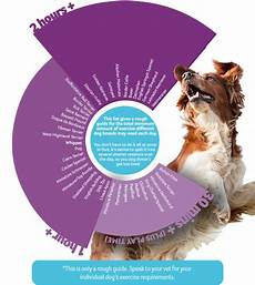 Puppy Exercise Chart How Much Exercise Does Your Dog Need Pdsa