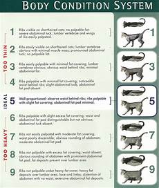 How Much To Feed A Cat Chart How Much Should I Feed My Cat Petmd