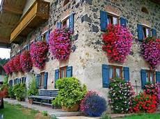 piante da davanzale fiori da balcone pendenti 3 piante a cascata facili da